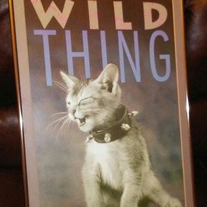 Framed Wild thing cat  picture